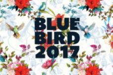 Blue Bird Festival 2017